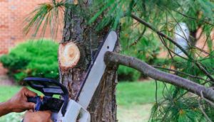 Professional is cutting trees using a chainsaw