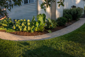 landscaping with pathway