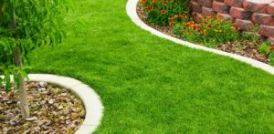 green lawn with tree and flower bed